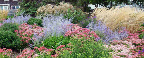 TownGardens_Image3