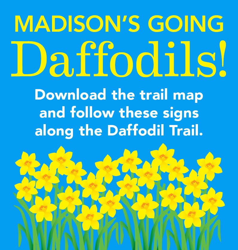 Daffodils_796x836